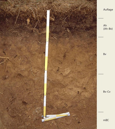 Soil profile of the sampling site Friedrichshäuser Bruch; Photo: FhG IME