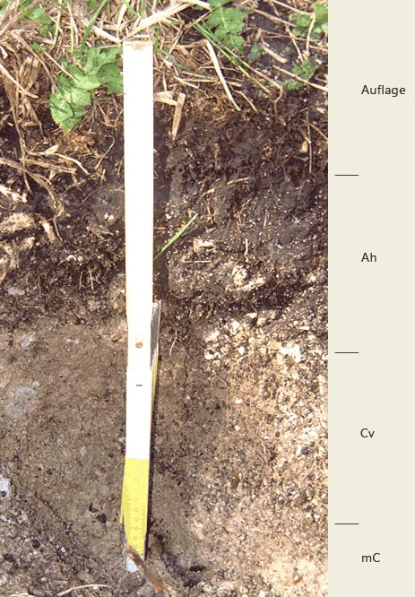 Soil profile of the sampling site Wimbachtal; Photo: FhG IME