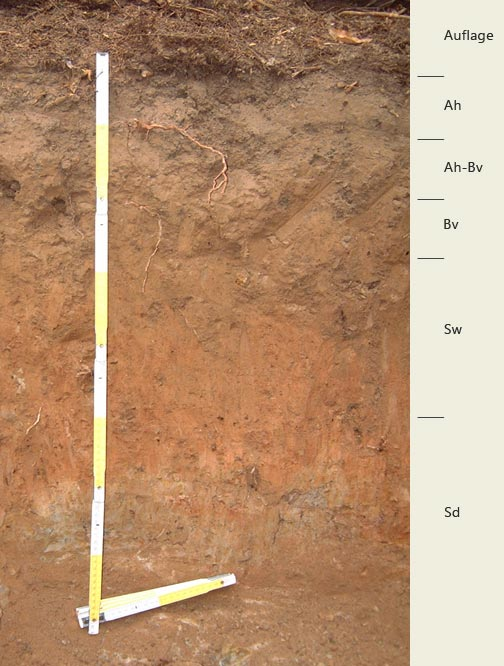 Soil profile of the sampling site; Photo: FhG IME