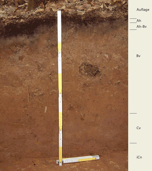 Soil profile of the sampling site Edersberg; Photo: FhG IME